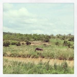 Spot the beautiful elephant